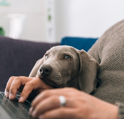 Dog laying on owner's arm while he types on laptop