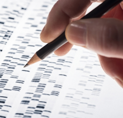 Scientist examining DNA gel used in genetics, medicine, biology, pharma research and forensics
